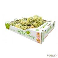 Продам оптом виноград TM AGRO SENCO