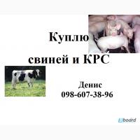 Куплю свиней и КРС живым весом