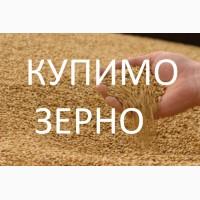 Постійно закуповуємо зерновідходи пшениці