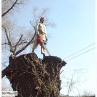 Удаление деревьев Киев Кронирование, обрезка деревьев