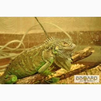 Продажа экзотических рептилий