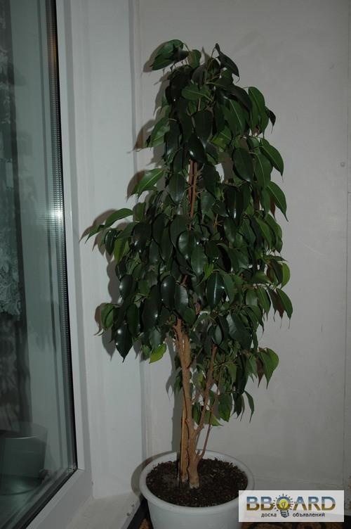 Комнатные растения киев