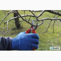 Обрезка деревьев и кустарников. Обрезка плодовых деревьев