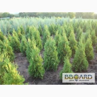 AG garden - питомник декоративных растений