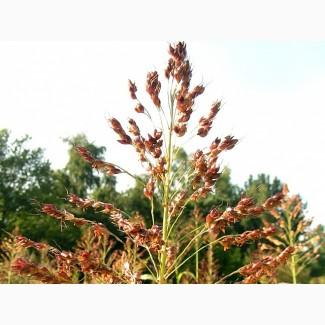 Продам суданскую траву