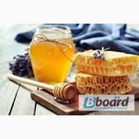 Куплю мед оптом постоянно