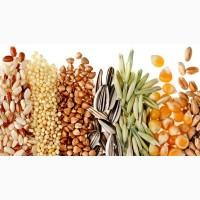Куплю масличные: тыквенные семечки, кондитерский подсолнух, полосатый подсолнечник, лен