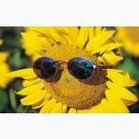 Пропонуємо гібрид соняшнику Матадор