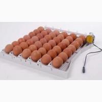 Купить инкубационное яйцо Мастер Грей