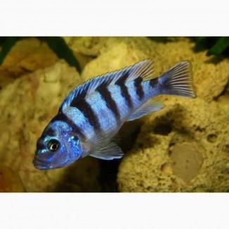 Интернет-магазин *Aqua-fish