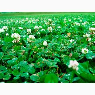 Семена Клевера Белого