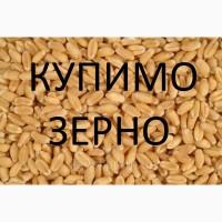 Агрофірма постійно закуповує у сільгоспвиробників пшеницю