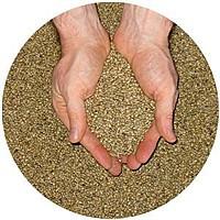 Семена Люцерны сорт Надежда и Регина