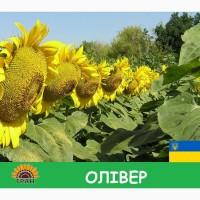 Насіння соняшника Олівер / Семена Подсолнечника гибрид Оливер