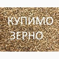 Компанія постійно закуповує у сільгоспвиробників Пшеницю з Домішкою