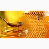 Куплю мед оптом в ЧЕРКАССКІЙ и сусідніх обл