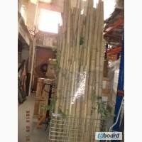 Бамбук декоративный б/у в хорошем состоянии
