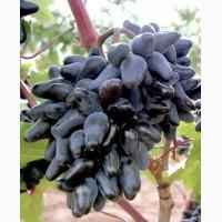Продам виноградник