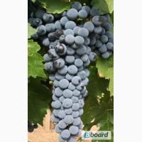 Продам отличного качества натуральные вина