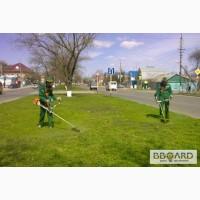 Скосим покосим траву амброзию бурьян