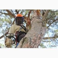 Опытная бригада арбористов спилит сложные деревья в любом городе