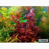 Продаю аквариумные растения
