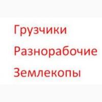 Услуги разнорабочих грузчиков для погрузки Одесса