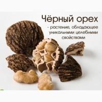 Саженцы черного (американского )ореха