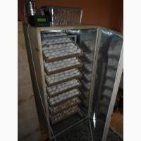 Купить Инкубатор автоматический на 1000 яиц