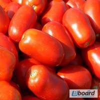 Продам семена Томат Классик F1 (Nunhems)