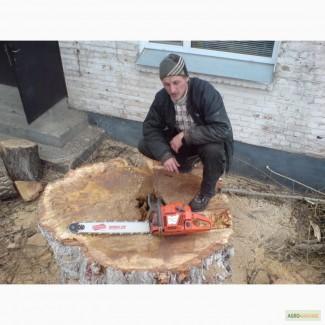 Спил деревьев Киев. Удаление пней, вывоз веток, дробление веток дробилкой, вывоз веток