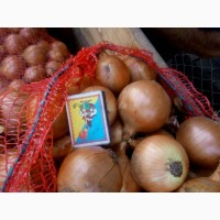 Продам лук репчатый сорт Штутгарт