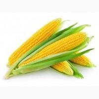 Куплю кукурузу Урожай 2017г