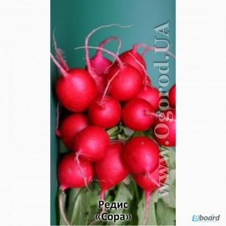 Семена редиса «Сора» - 2 грамма