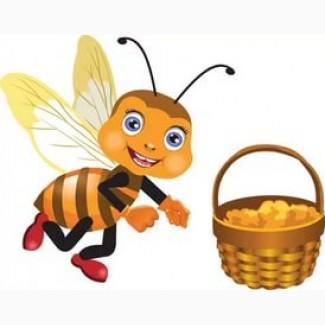 Куплю мед оптом от 500 кг