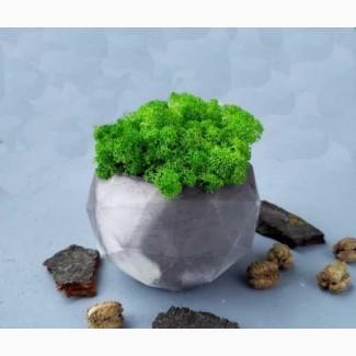 Эко-декор, скандинавский стабилизированный мох, в бетонном горшке