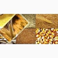 ПРОДАМ: пшеницу, кукурузу, ячмень, соя, рапс и др. культуры