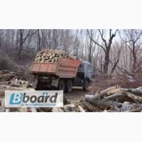 Продам дрова Белая Церковь. Купить дрова колотые и неколотые