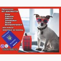 Оформление вет документов для вывоз собаки из Украины в Европу