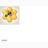 Продам пчёл и пчёлопакеты