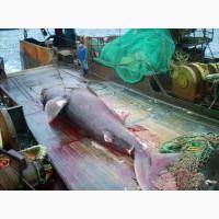 Рисовая мука в производстве продуктов рыбопереработки