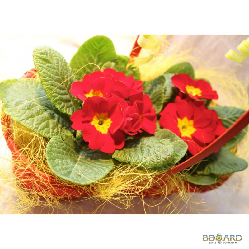 Цветы живые опт киев стабилизированные цветы.живые цветы на 5 лет