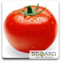 Купим помидоры оптом