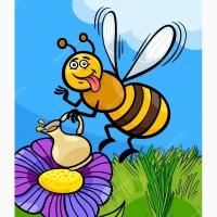 Покупаю мед в Днепропетровской и соседних обл от 500 кг