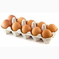 Яйцо куриное С2 пищевое, яйце харчове