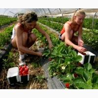Работа в Португалии для мужчин и женщин