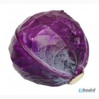 Продам семена Капуста краснокочанная Черная голова