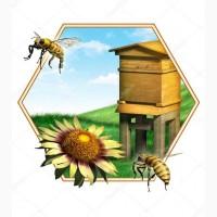 Закуповую мед в Кривому Розі