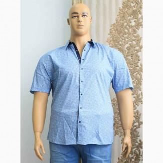Сорочки мужские больших размеров