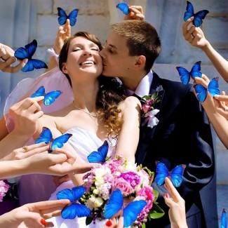 Салют живых бабочек на свадьбу